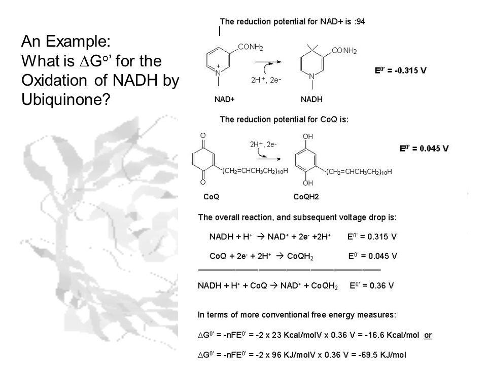 An Example: What is DGo' for the Oxidation of NADH by Ubiquinone