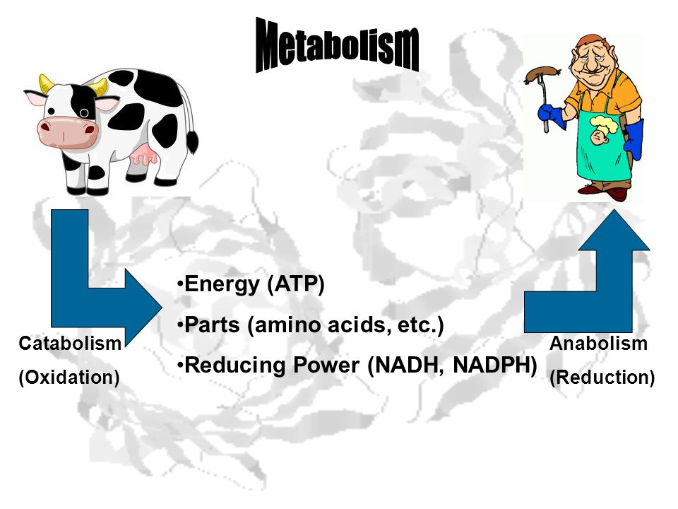 Metabolism Energy (ATP) Parts (amino acids, etc.)