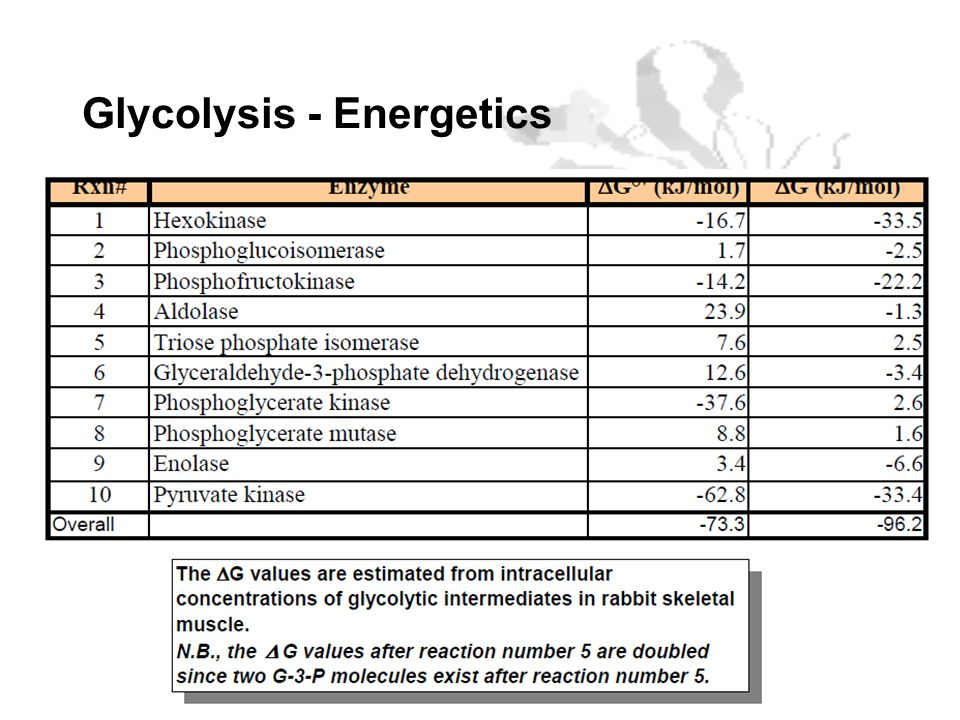 Glycolysis - Energetics