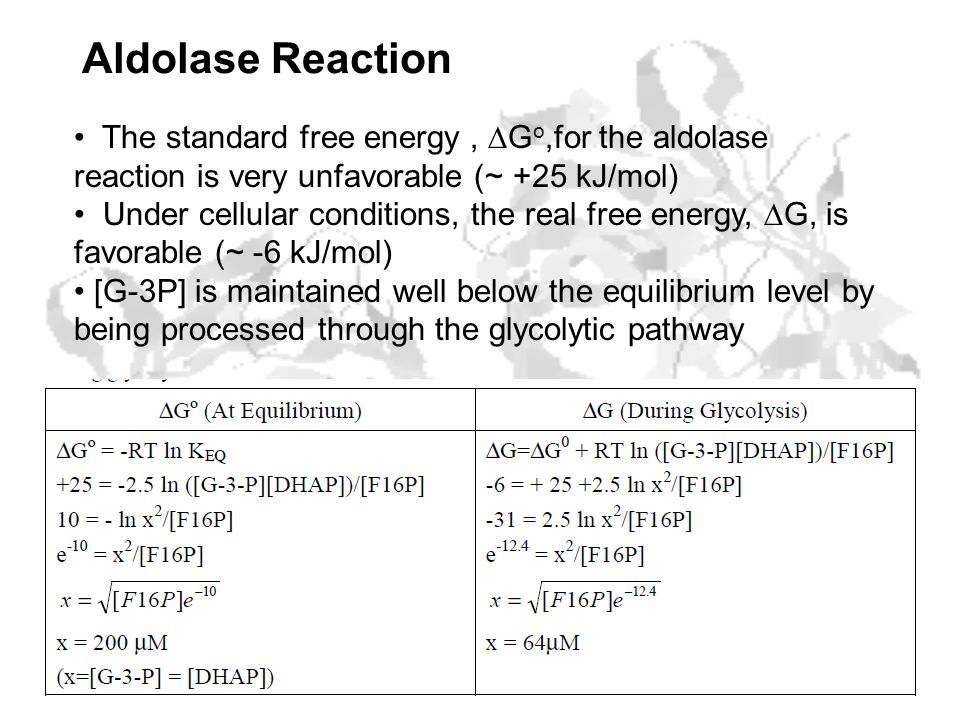Aldolase Reaction The standard free energy , DGo,for the aldolase reaction is very unfavorable (~ +25 kJ/mol)