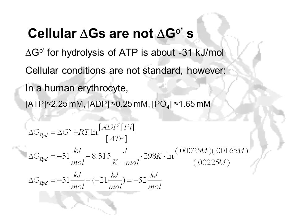 Cellular DGs are not DGo' s