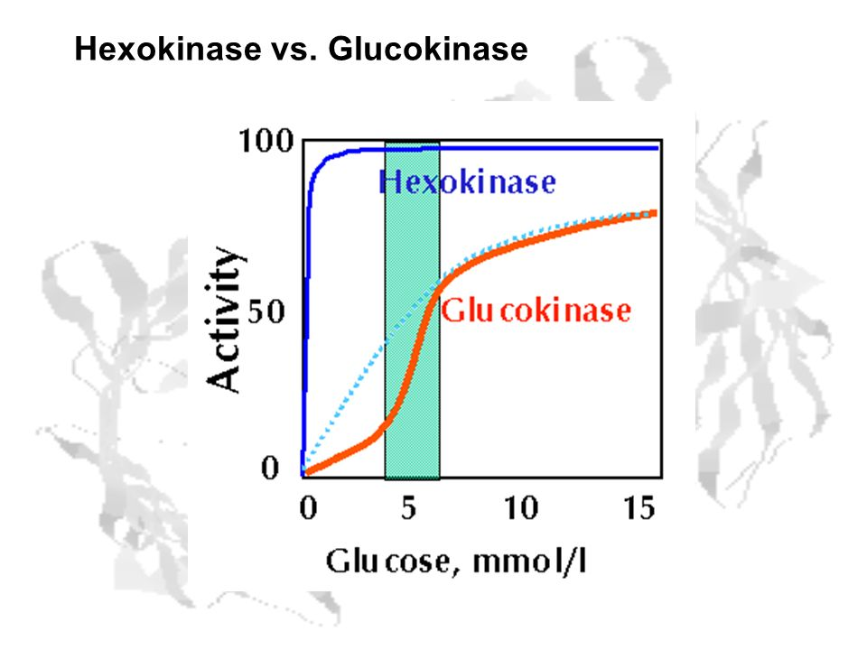 Hexokinase vs. Glucokinase