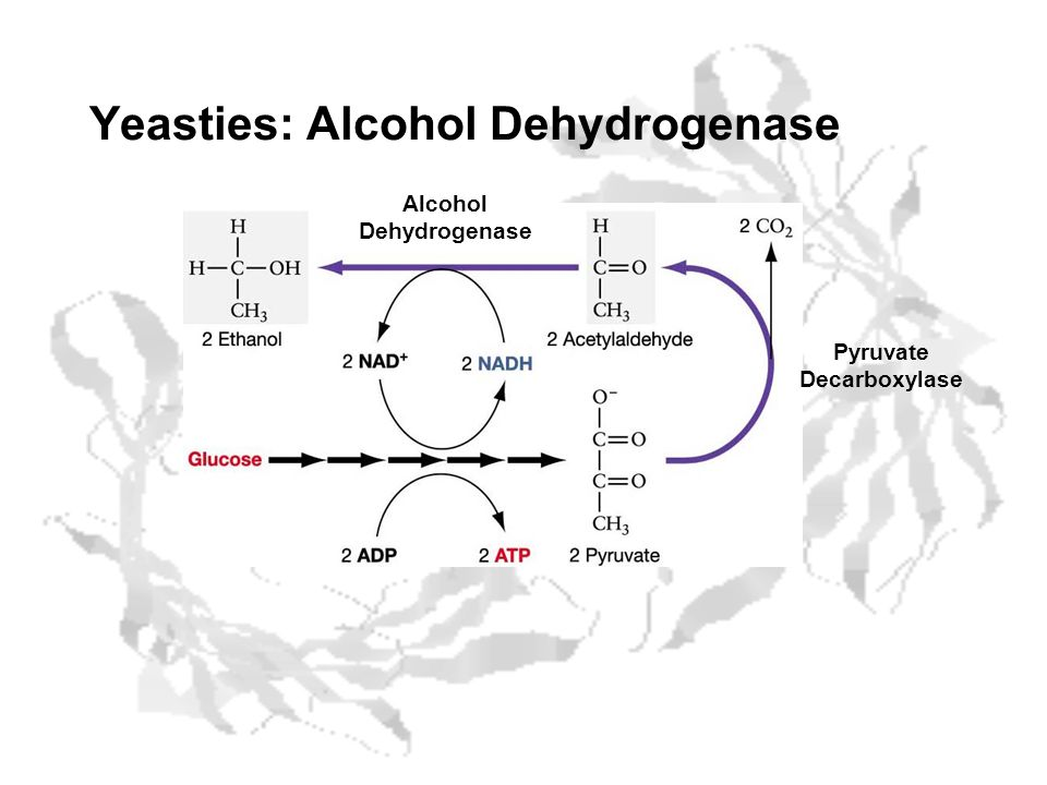 Yeasties: Alcohol Dehydrogenase