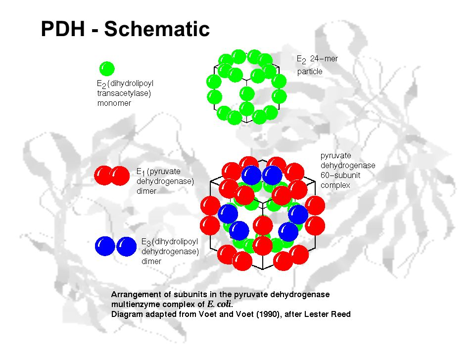 PDH - Schematic
