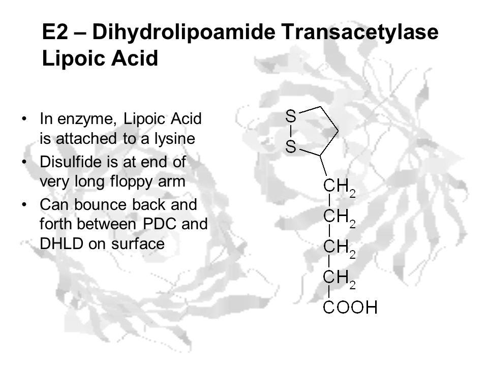 E2 – Dihydrolipoamide Transacetylase Lipoic Acid