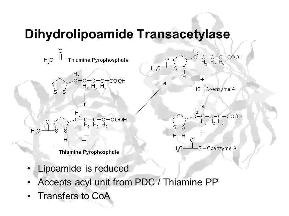 Dihydrolipoamide Transacetylase