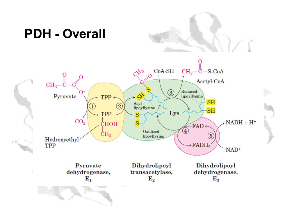 PDH - Overall