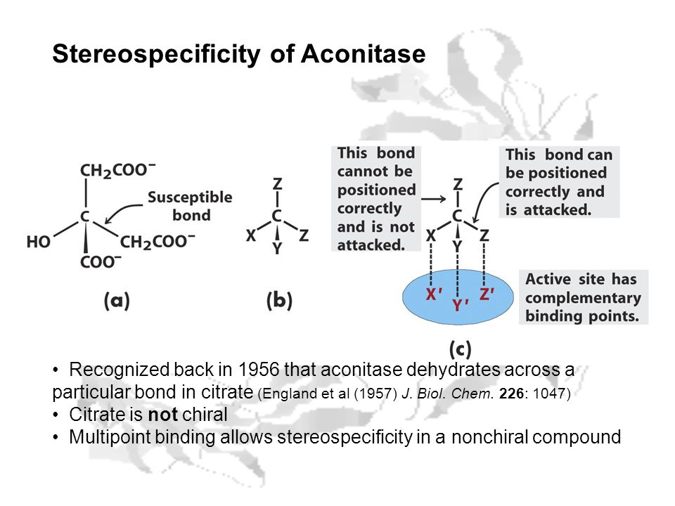 Stereospecificity of Aconitase