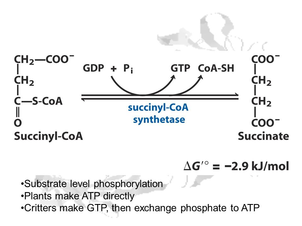Substrate level phosphorylation