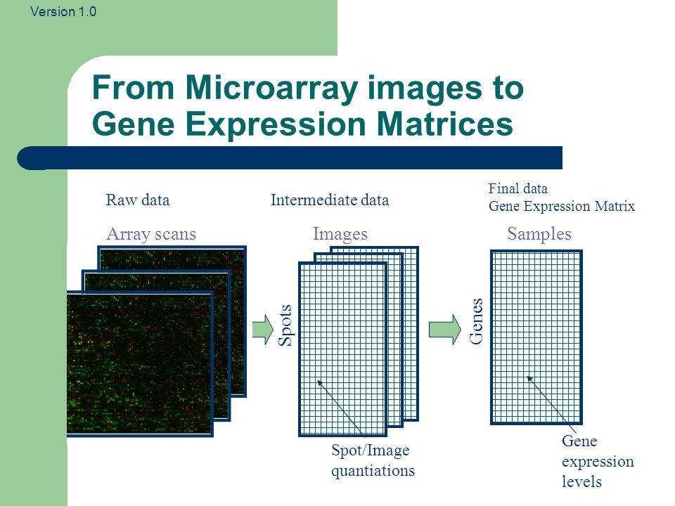 From Microarray images to Gene Expression Matrices