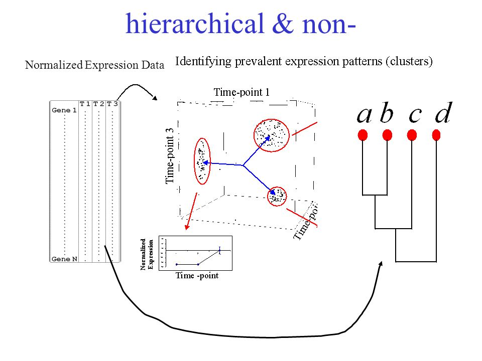 hierarchical & non- Normalized Expression Data