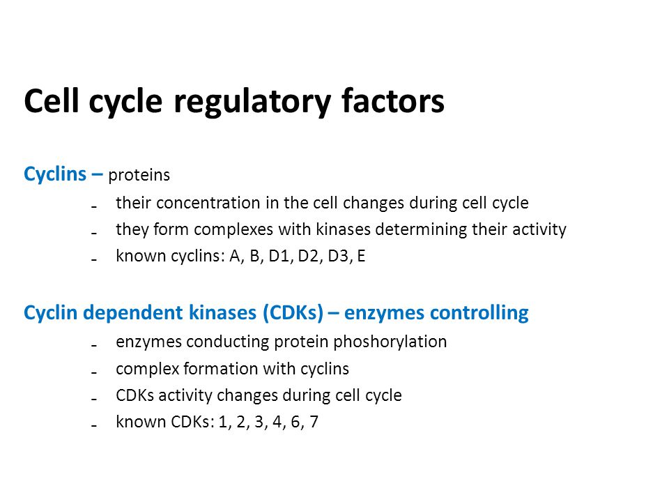 Cell cycle regulatory factors