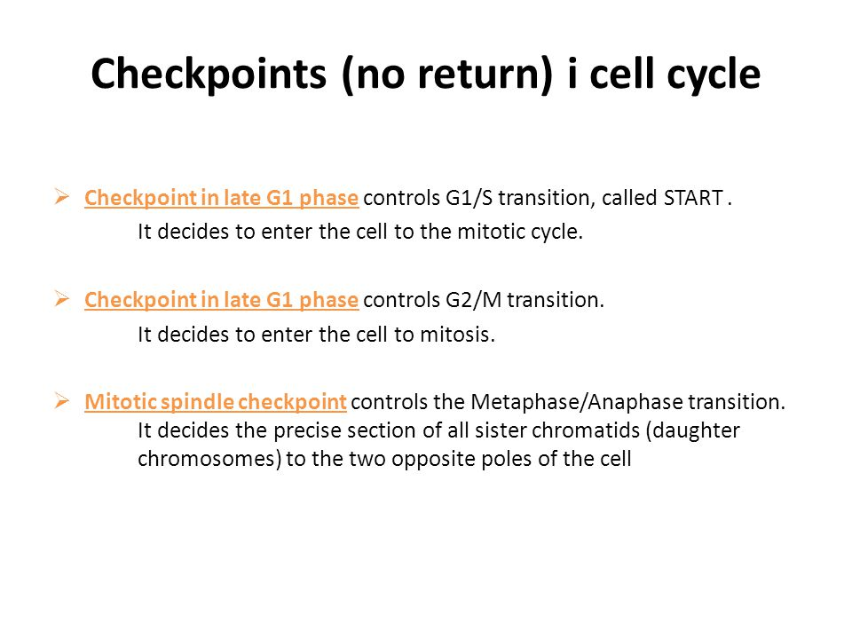 Checkpoints (no return) i cell cycle