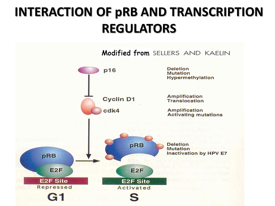 INTERACTION OF pRB AND TRANSCRIPTION REGULATORS