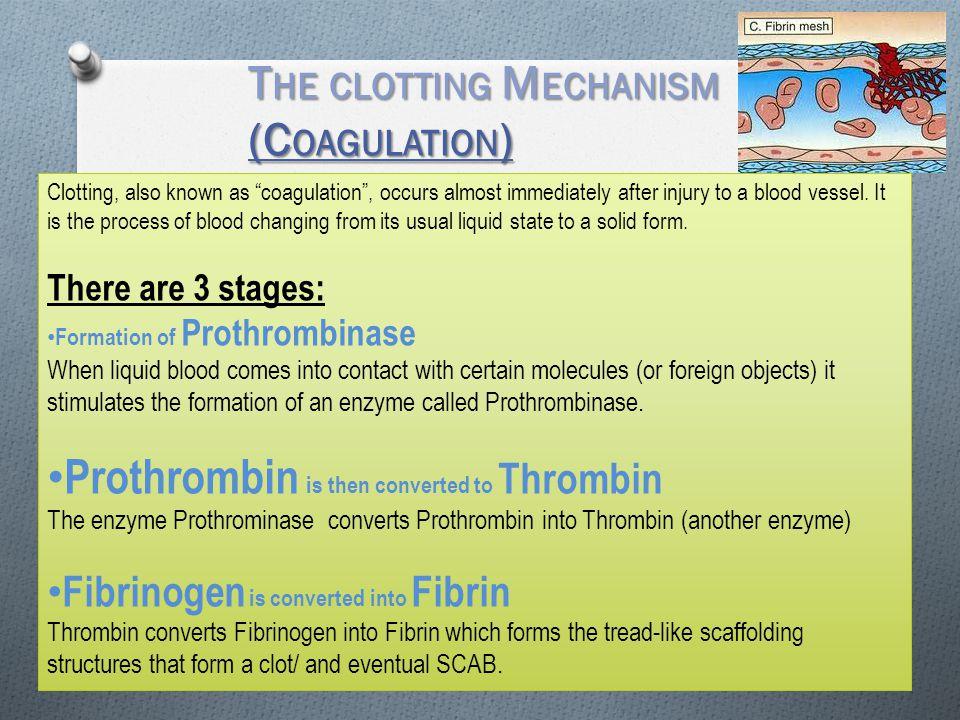The clotting Mechanism (Coagulation)