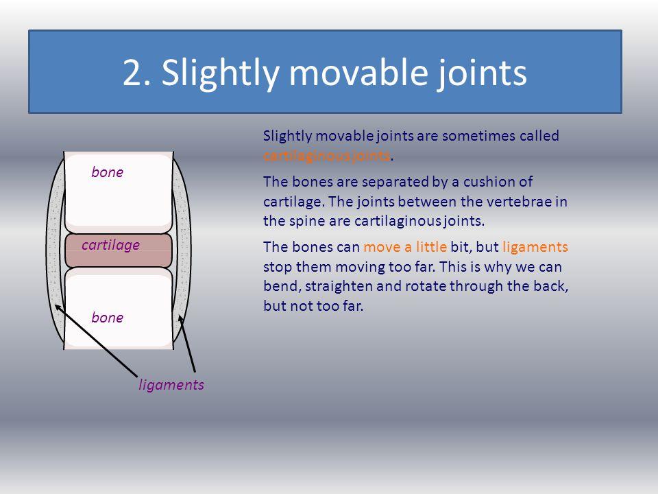 2. Slightly movable joints