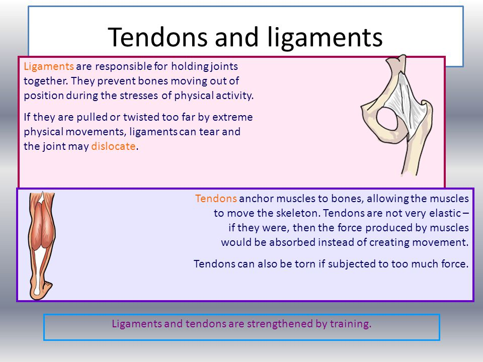 Ligaments and tendons are strengthened by training.