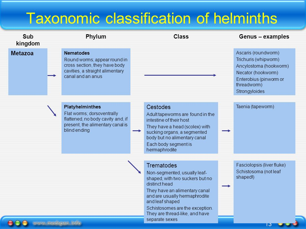 Taxonomic classification of helminths