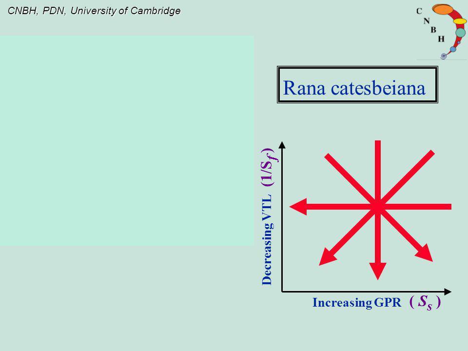 Rana catesbeiana (1/Sf ) Decreasing VTL Increasing GPR ( Ss )