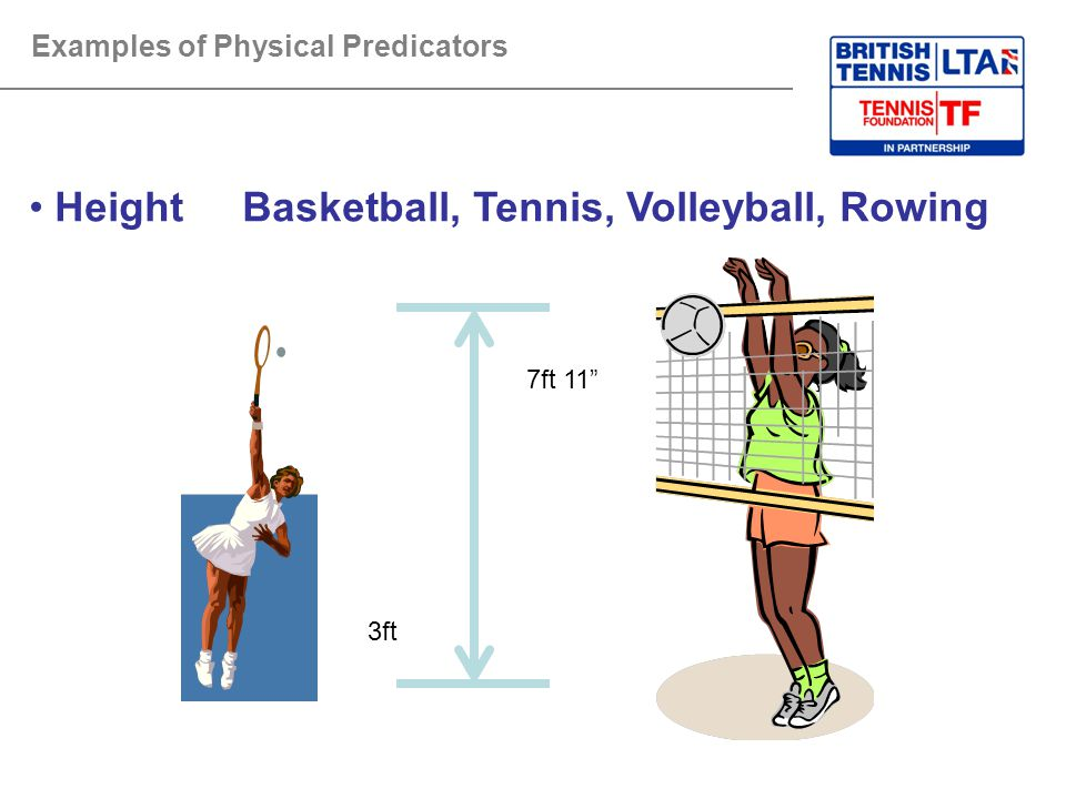 Height Basketball, Tennis, Volleyball, Rowing