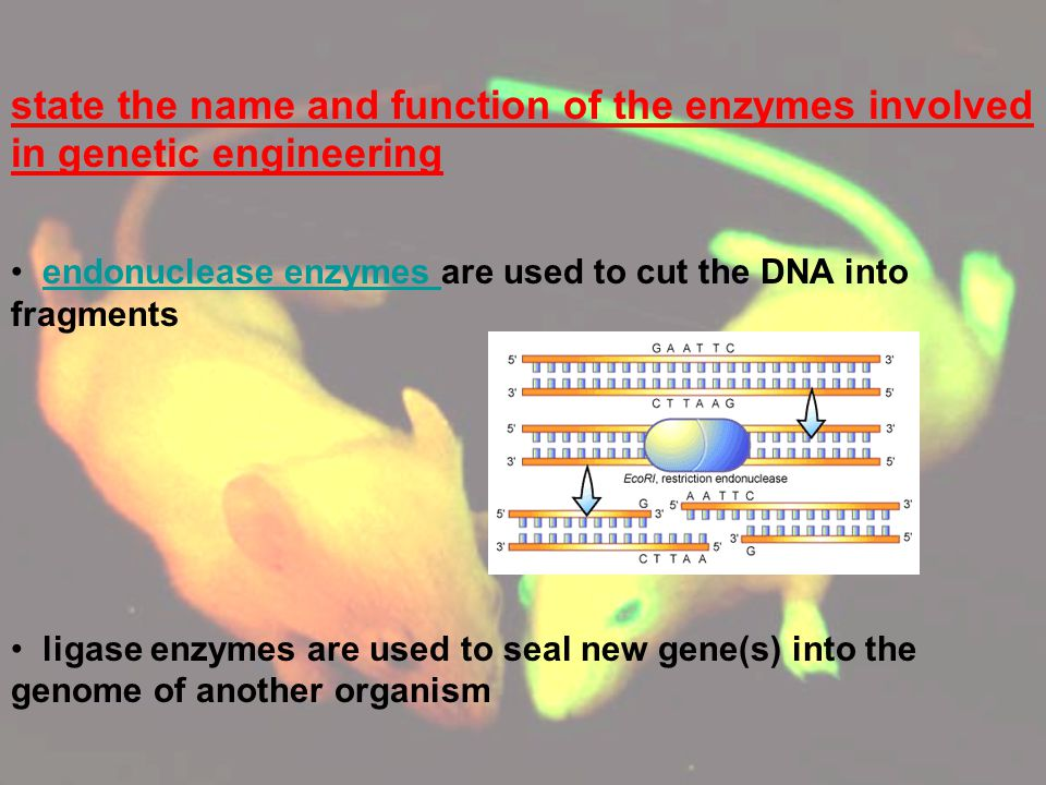 state the name and function of the enzymes involved in genetic engineering