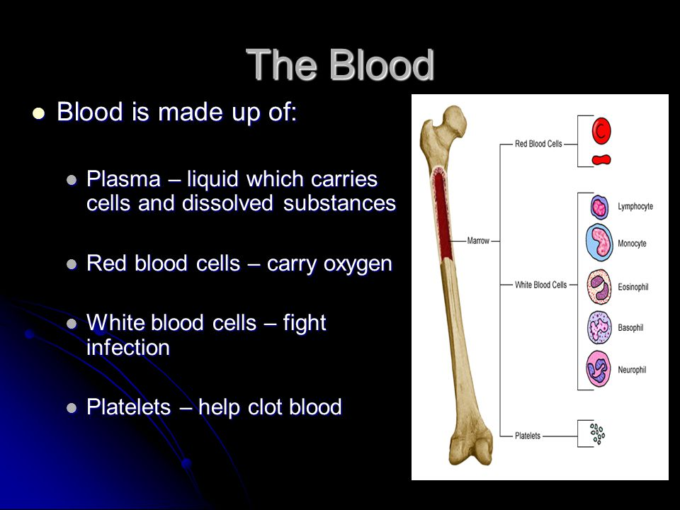 The Blood Blood is made up of:
