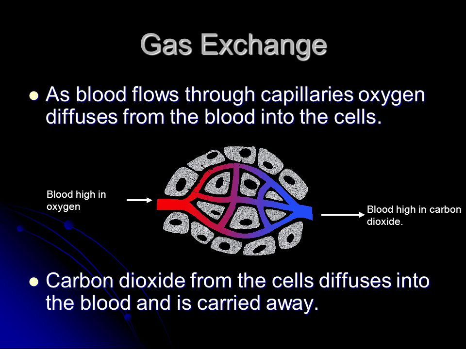 Gas Exchange As blood flows through capillaries oxygen diffuses from the blood into the cells.