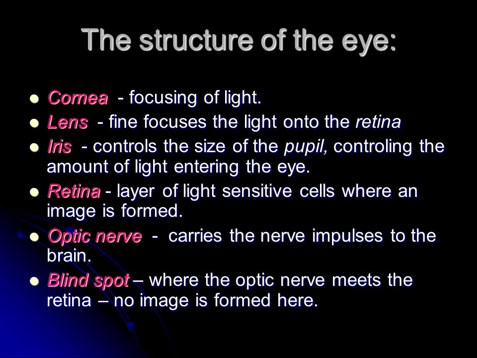 The structure of the eye: