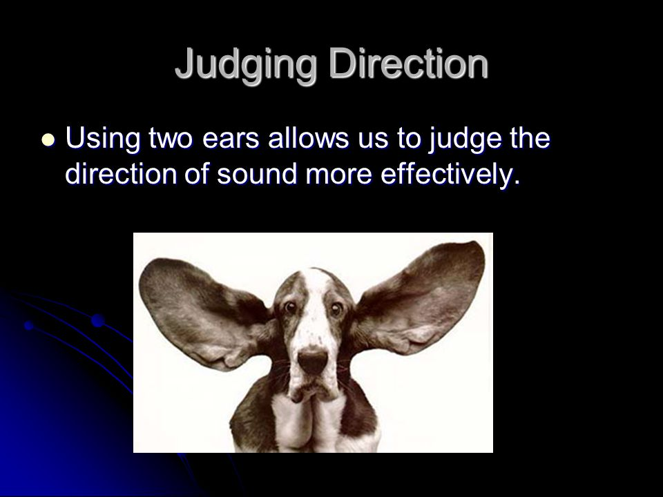 Judging Direction Using two ears allows us to judge the direction of sound more effectively.
