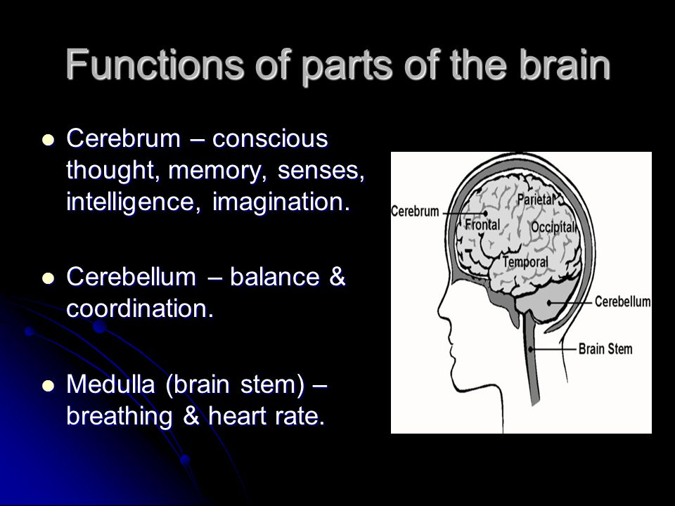 Functions of parts of the brain