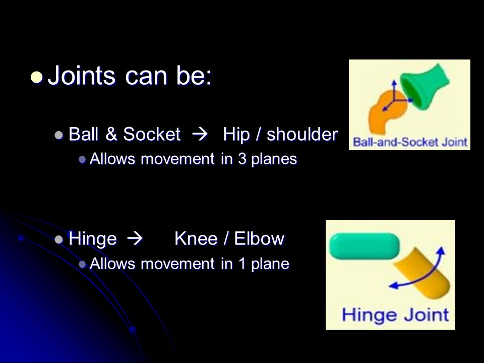 Joints can be: Ball & Socket  Hip / shoulder Hinge  Knee / Elbow