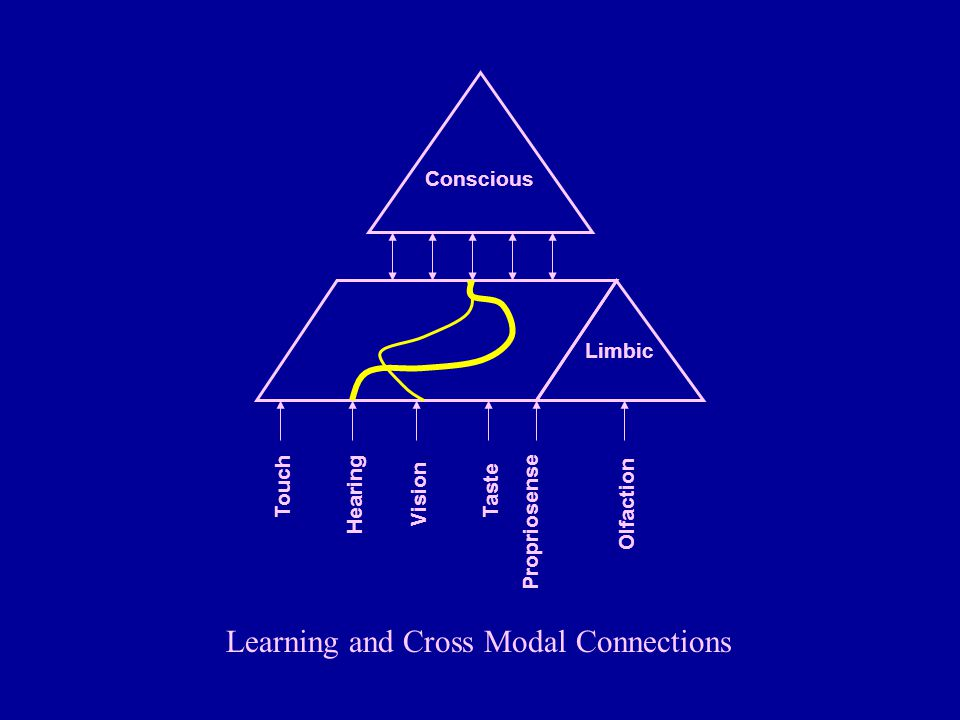 Learning and Cross Modal Connections