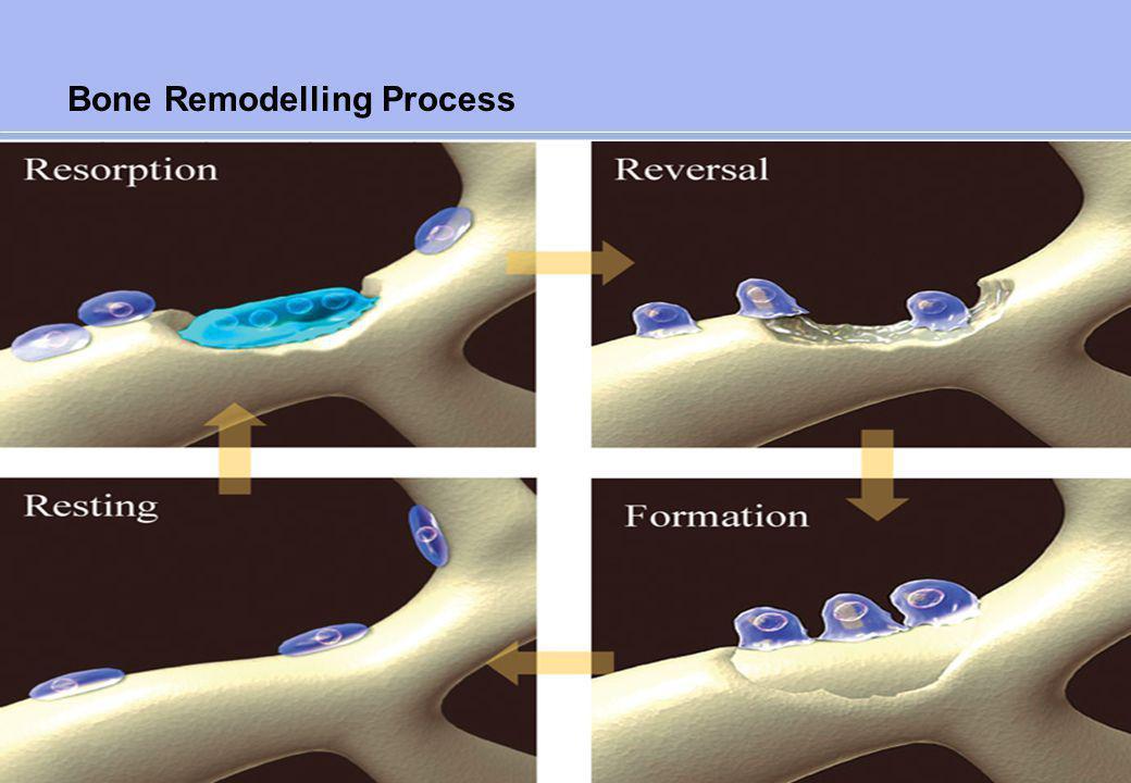 Effect on Bone Remodelling
