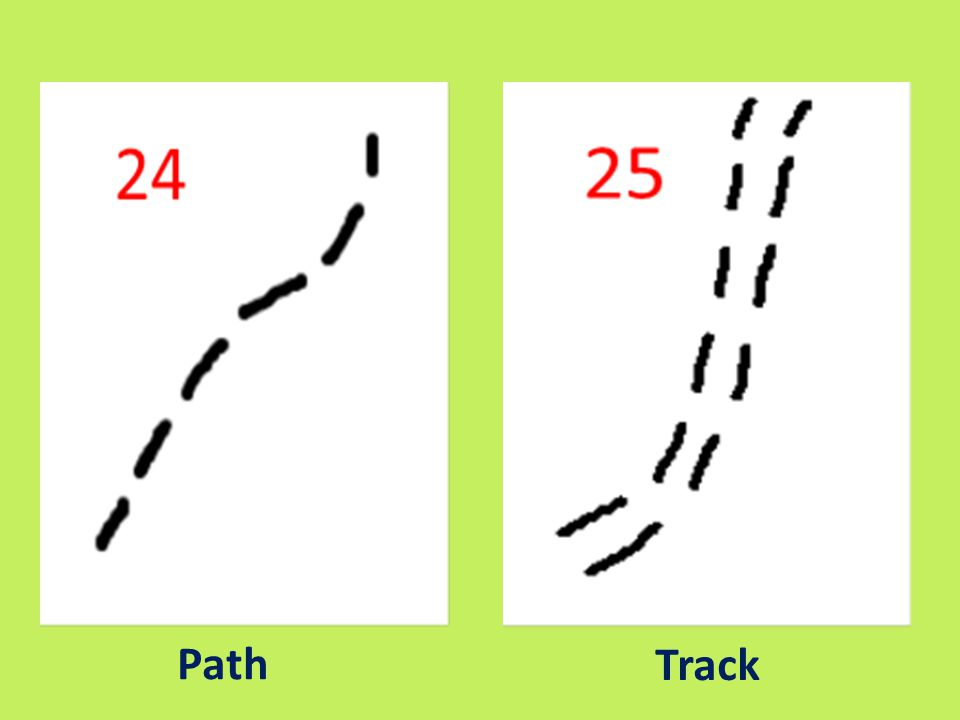 Path Track