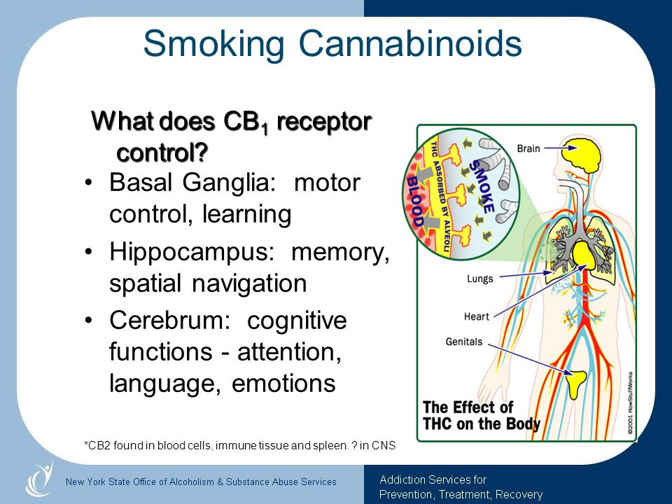 Smoking Cannabinoids What does CB1 receptor control