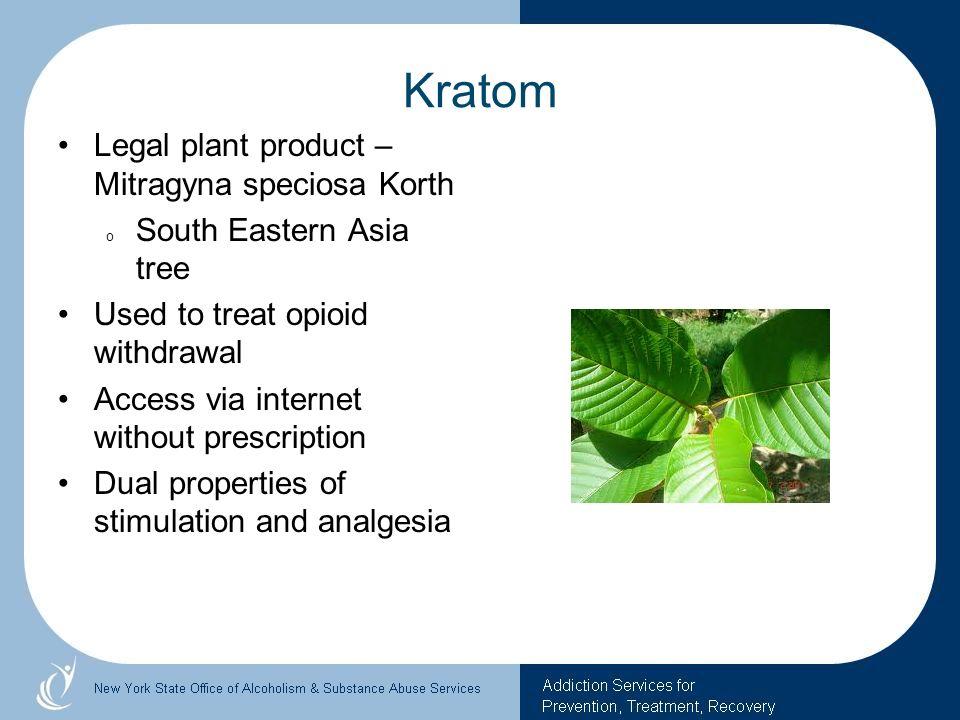 Kratom Legal plant product – Mitragyna speciosa Korth