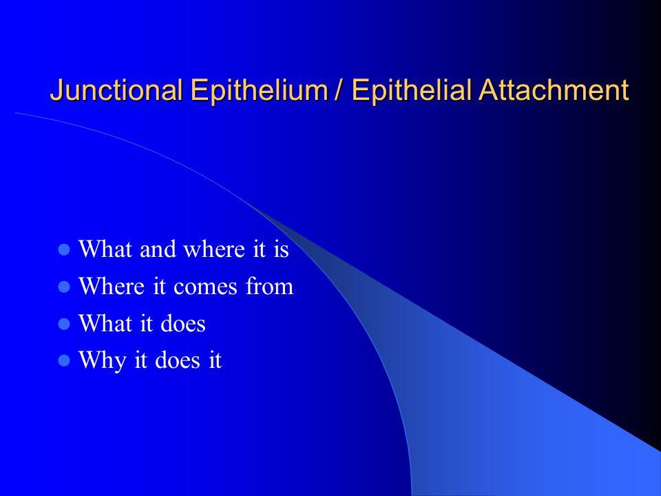Junctional Epithelium / Epithelial Attachment
