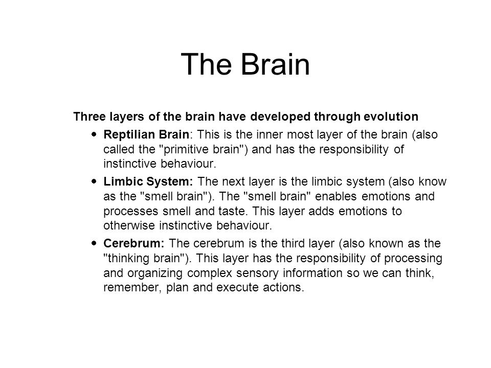 Three layers of the brain have developed through evolution