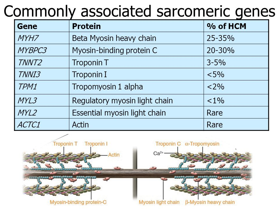Commonly associated sarcomeric genes