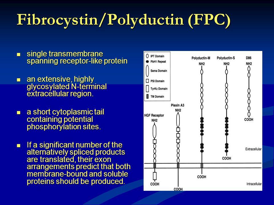Fibrocystin/Polyductin (FPC)