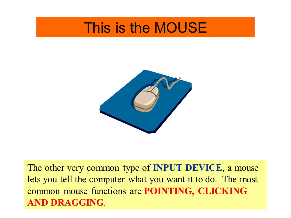 Mouse Info. This is the MOUSE