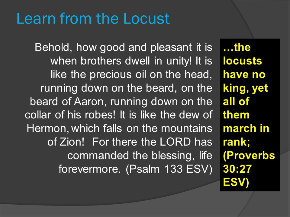 Learn from the Locust