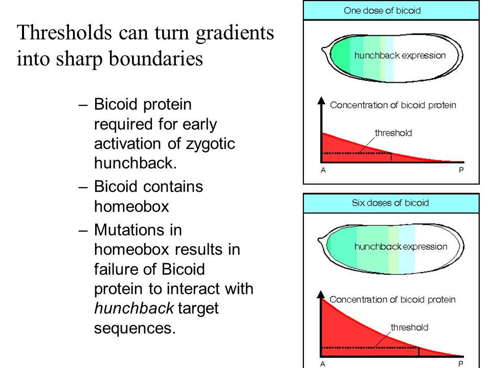 Thresholds can turn gradients into sharp boundaries