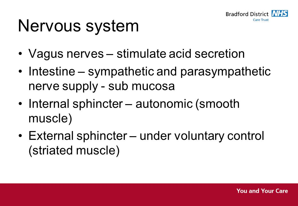 Nervous system Vagus nerves – stimulate acid secretion