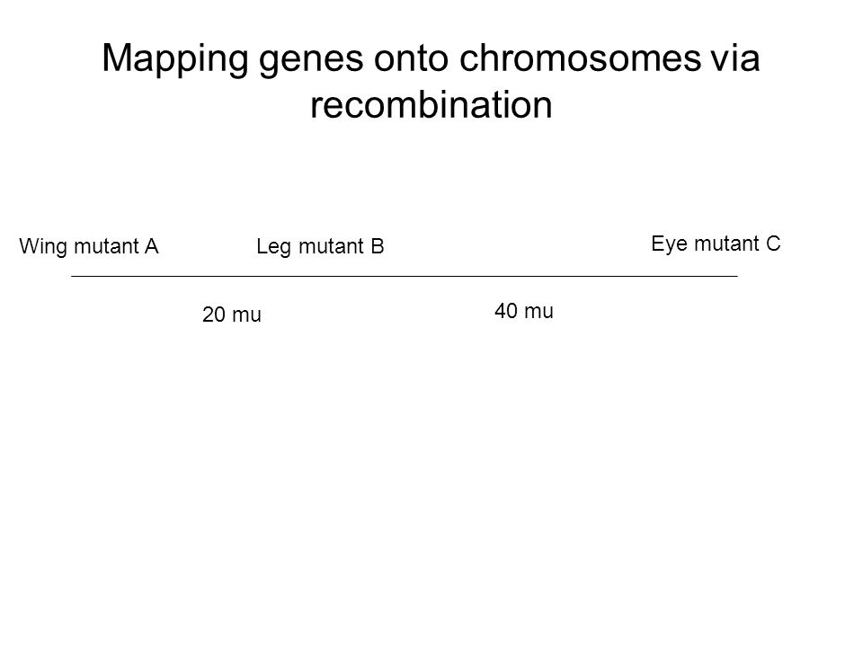 Mapping genes onto chromosomes via recombination
