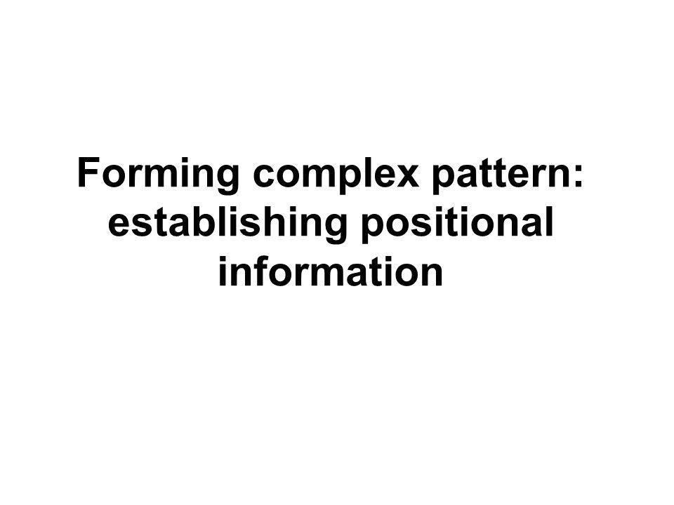 Forming complex pattern: establishing positional information