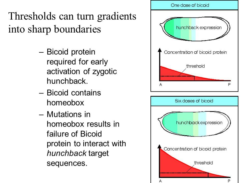 Thresholds can turn gradients into sharp boundaries