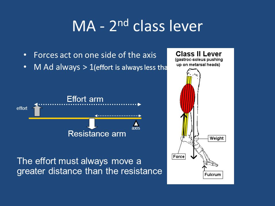 MA - 2nd class lever Forces act on one side of the axis