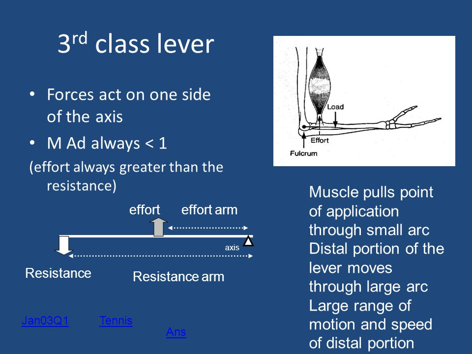 3rd class lever Forces act on one side of the axis M Ad always < 1