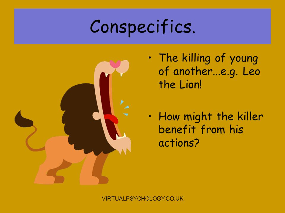 Conspecifics. The killing of young of another...e.g. Leo the Lion!